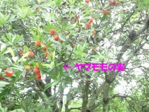 NEC_0114a.jpg