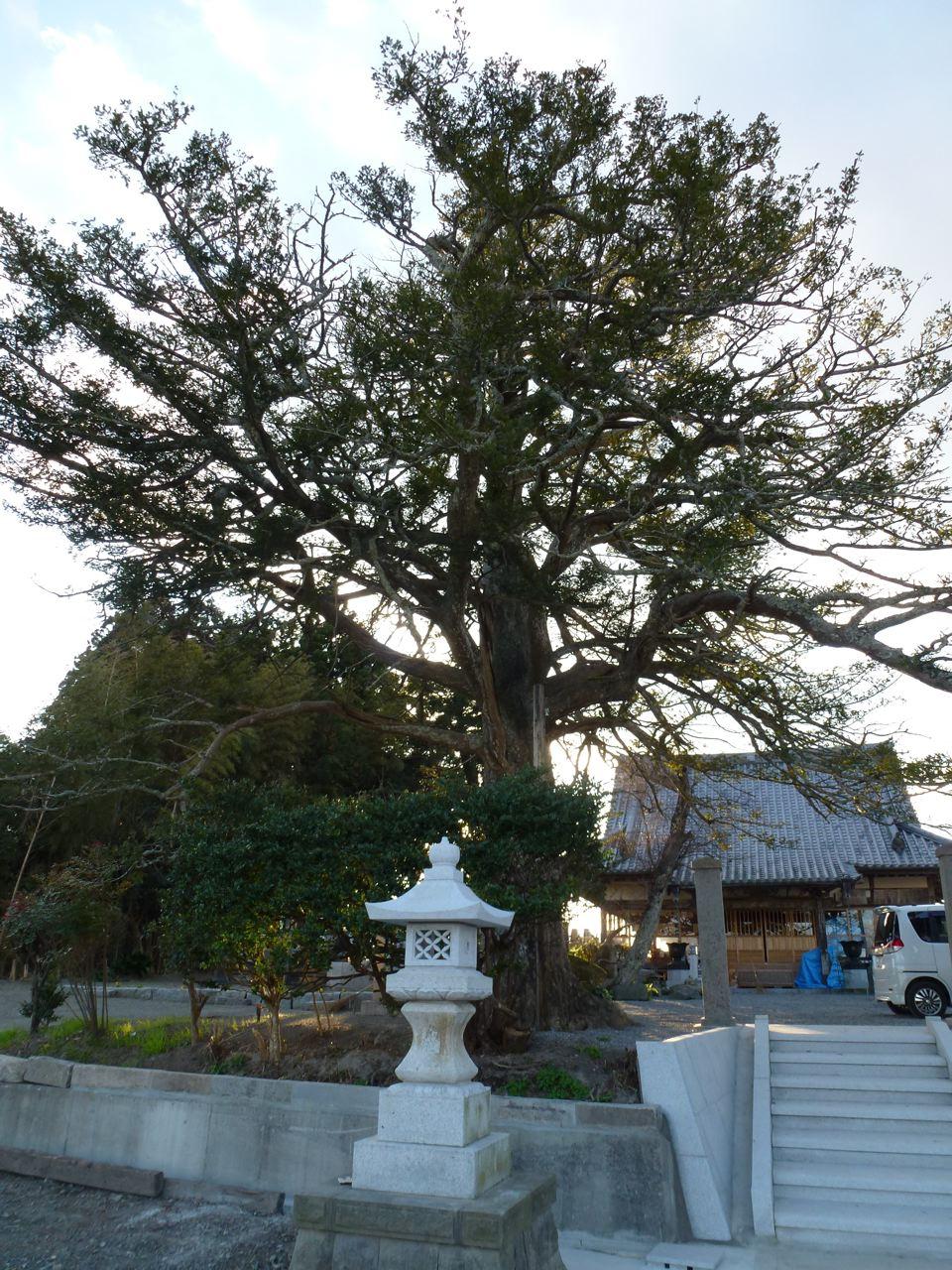 修行院とモミの木