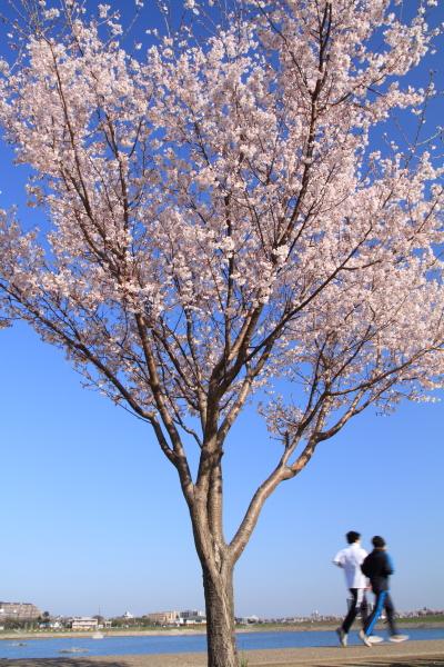 2012_0408_2_2.jpg