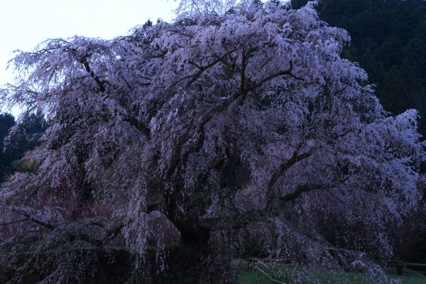 2012_0415_1_7.jpg