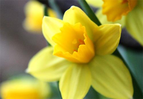 庭の花 066