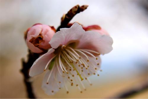 庭の花 206