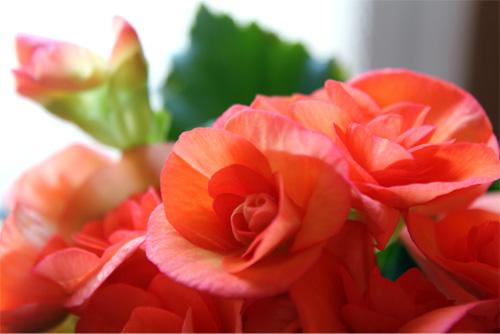 庭の花 218