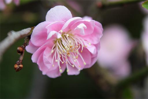 庭の花 244
