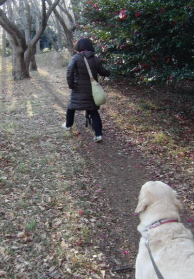 公園4_convert_20140121121823