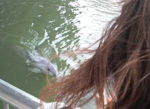 イルカちゃん2