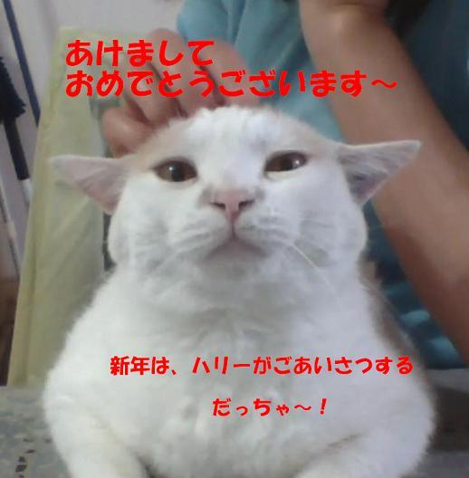 20130518-2あけおめ