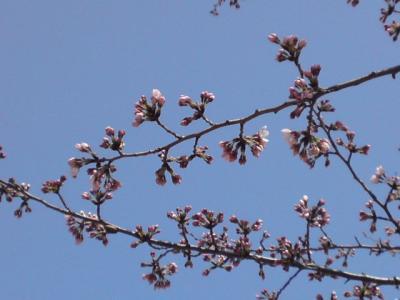 桜12042