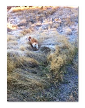 羊の国のラブラドール絵日記シニア!!「セカチュー」写真4