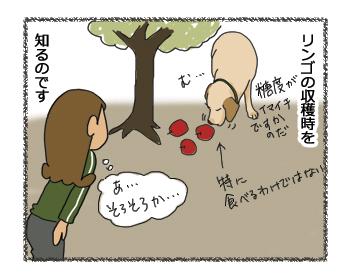 羊の国のラブラドール絵日記シニア!!「アップル・ピッカー」4コマ4