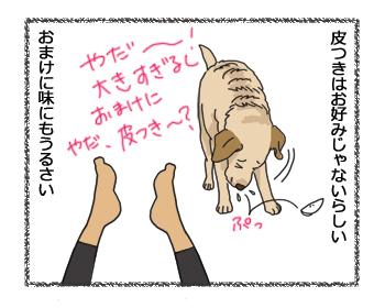 羊の国のラブラドール絵日記シニア!!「どうなの!?」4コマ3