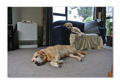 羊の国のラブラドール絵日記シニア!!「犬天国裏?事情」写真4