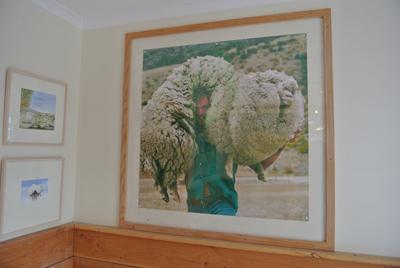 羊の国のラブラドール絵日記シニア!!「ケンカのワケは」写真日記1