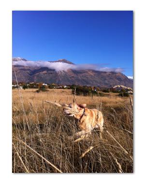 羊の国のラブラドール絵日記シニア!!「いらぬ疑い」写真2