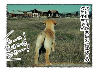 羊の国のラブラドール絵日記シニア!!「おしえてないのに」4コマ1