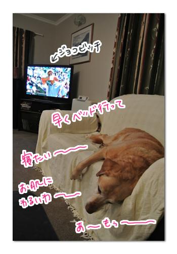 羊の国のラブラドール絵日記シニア!!「勝負の世界」写真日記4