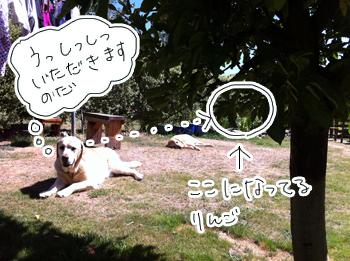 羊の国のラブラドール絵日記シニア!!「果物パッション」写真日記3