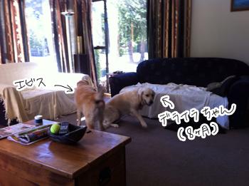 羊の国のラブラドール絵日記シニア!!「新キャラ登場!?」写真1