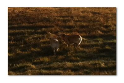 羊の国のラブラドール絵日記シニア!!「なだめの二時間」写真2