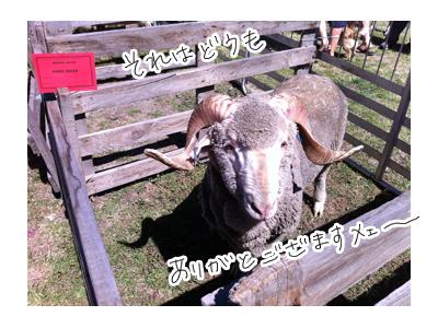 羊の国のラブラドール絵日記シニア!!写真日記「タイトルどおり・・・」2