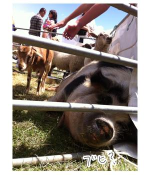 羊の国のラブラドール絵日記シニア!!写真日記「タイトルどおり・・・」4