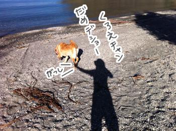 羊の国のラブラドール絵日記シニア!!「バタバタバレンタイン」写真日記1