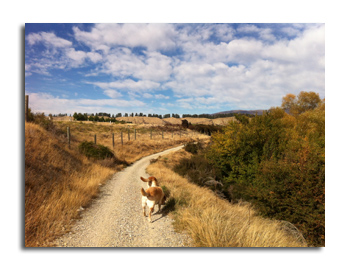 羊の国のラブラドール絵日記シニア!!「実りの秋」写真1