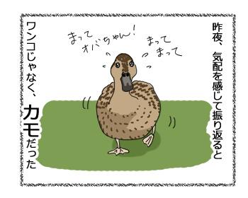 羊の国のラブラドール絵日記シニア!!「ペットかも~」4コマ漫画2