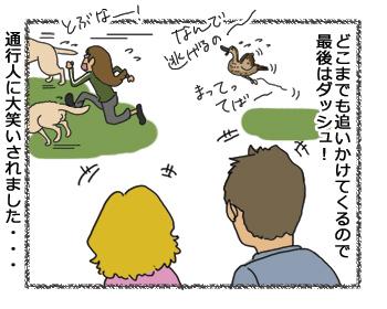 羊の国のラブラドール絵日記シニア!!「ペットかも~」4コマ漫画4