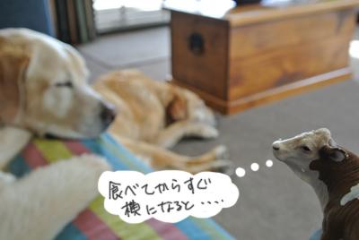 羊の国のラブラドール絵日記シニア!!写真日記「天気の良い日は」写真1