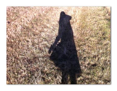 羊の国のラブラドール絵日記シニア!!「冬の入り口に・・・」写真日記7