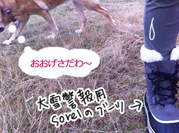 羊の国のラブラドール絵日記シニア!!「大雪警報発令中」写真2