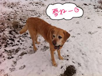 羊の国のラブラドール絵日記シニア!!「大雪警報発令中」写真4