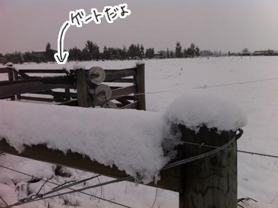 羊の国のラブラドール絵日記シニア!!「冬の二日目」写真日記6