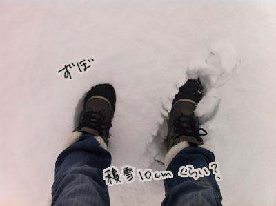 羊の国のラブラドール絵日記シニア!!「冬の二日目」写真日記7