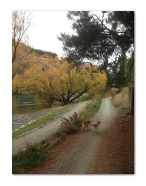 羊の国のラブラドール絵日記シニア!!「ウソつきクロエちゃん」写真1