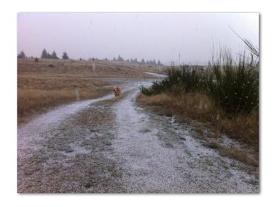 羊の国のラブラドール絵日記シニア!!「寒波到来」写真3