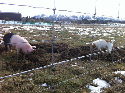 羊の国のラブラドール絵日記シニア!!「デザートにたとえると」写真日記5