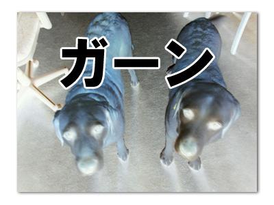 羊の国のラブラドール絵日記シニア!!「チーズケーキ」レシピ写真3