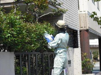ハチ駆除3