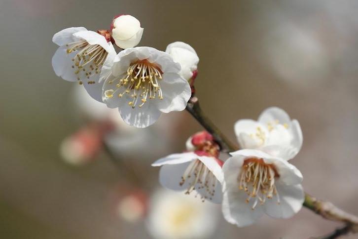 2011.03.04・『 花の文化園 』 大阪府 河内長野市 05