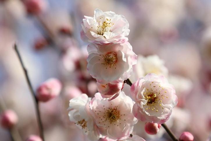 2011.03.04・『 花の文化園 』 大阪府 河内長野市 04