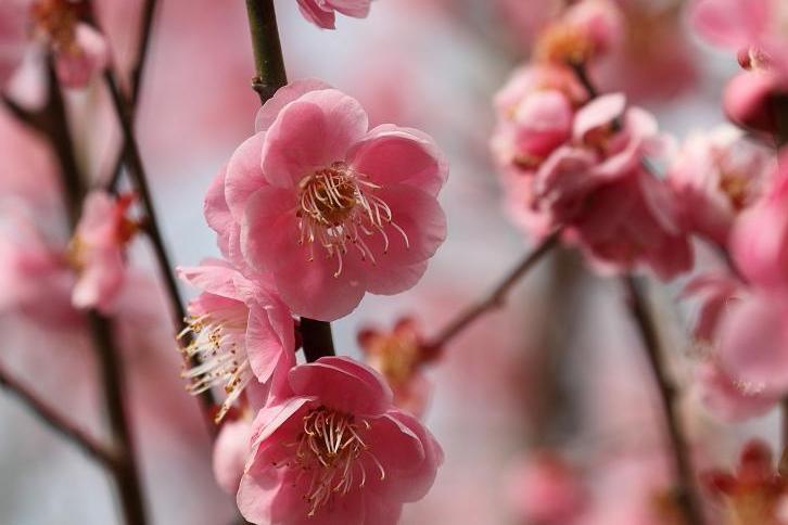 2011.03.04・『 花の文化園 』 大阪府 河内長野市 03