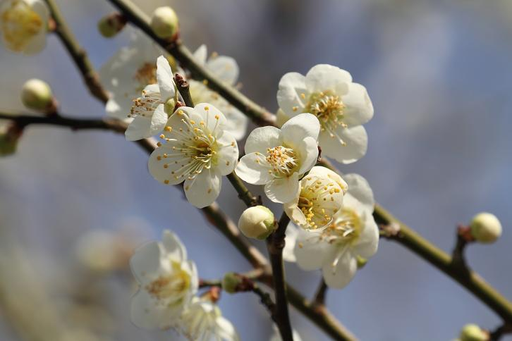 2011.03.04・『 花の文化園 』 大阪府 河内長野市 02