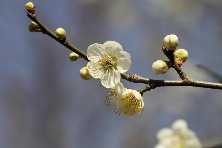 2011.03.04・『 花の文化園 』 大阪府 河内長野市 01