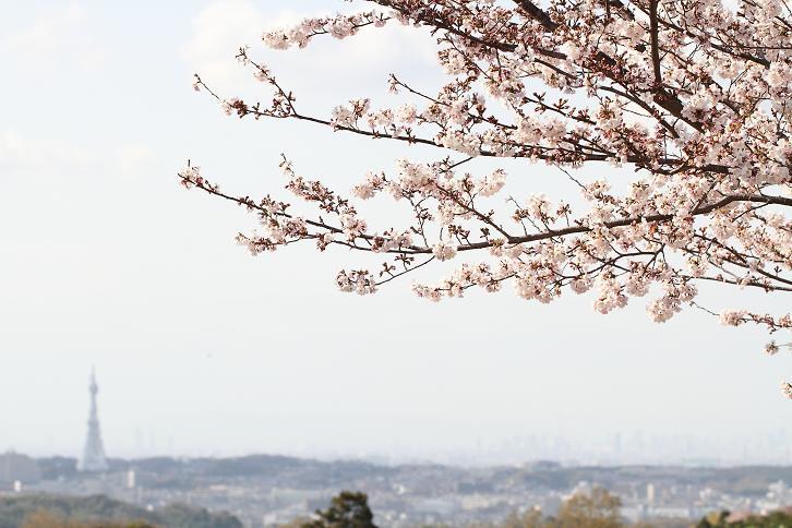 2011.04.07・『 千早赤坂村 』 大阪府 20