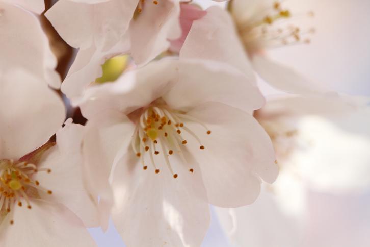 2011.04.07・『 千早赤坂村 』 大阪府 15