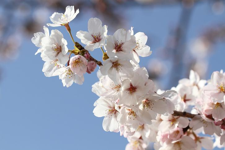 2011.04.07・『 千早赤坂村 』 大阪府 11