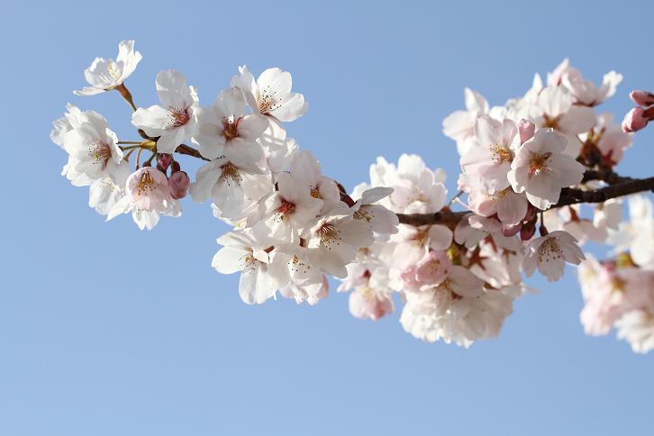 2011.04.07・『 千早赤坂村 』 大阪府 09
