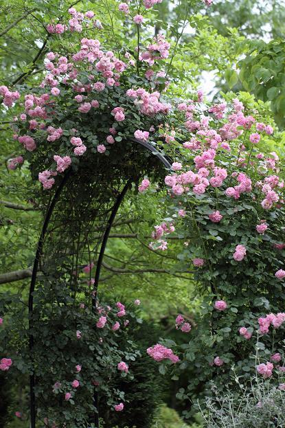 2011.05.31・『 花の文化園・薔薇 』 大阪府 河内長野市 13